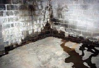 Грибок в подвале: как избавиться от грибка и как обрабатывать подполье