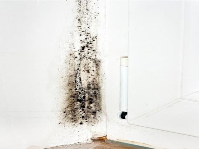 Плесень на стенах в квартире