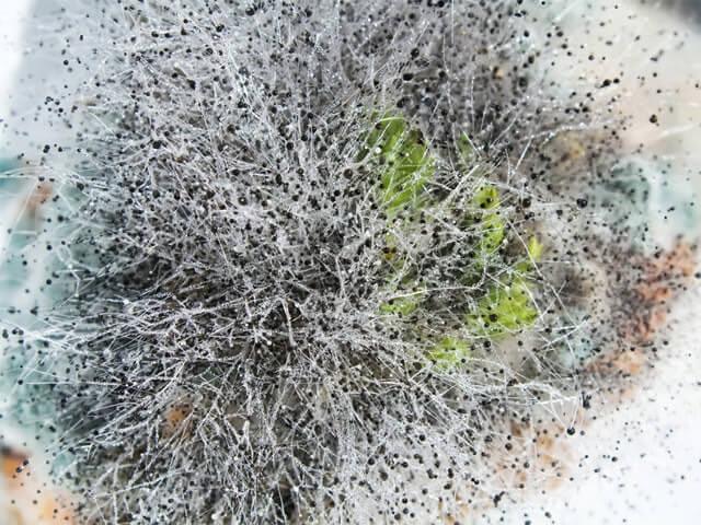 откуда берется плесень на варенье