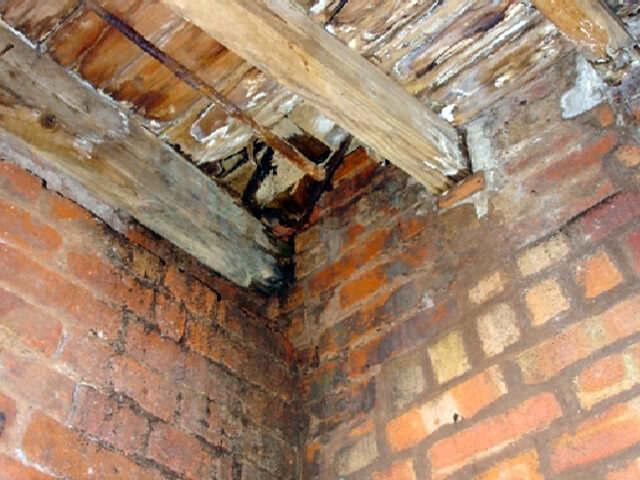 Плесень на стенах в подвале