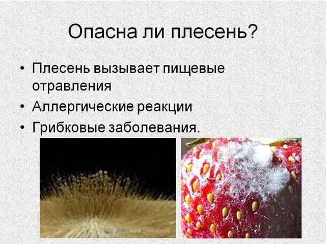 Что будет если съесть еду с плесенью